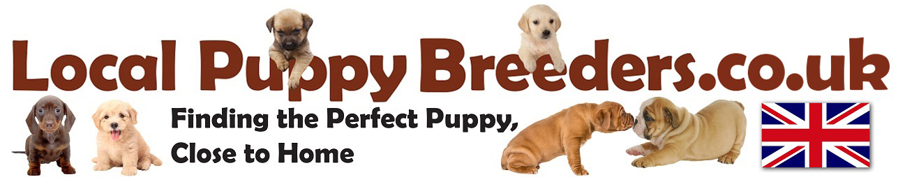 Localpuppybreeders.co.uk